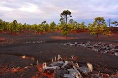 Black volcano soil with white herbs Stock Image