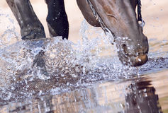 Black walking horse in water closeup Royalty Free Stock Photos