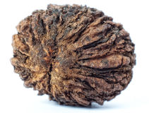 Black walnut Royalty Free Stock Photo