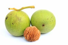 Free Black Walnut (Juglans Nigra) Royalty Free Stock Image - 50520916