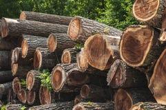 Black walnut saw logs Royalty Free Stock Images