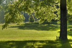 Black Walnut Tree Shade. A Black Walnut tree is back lit by a bright morning sun creating spots of shade in the grass Stock Photography