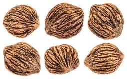 Black walnuts isolated Stock Photos