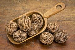 Black walnuts in rustic scoop Royalty Free Stock Photography