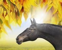 Black warmblood horse on background of sunny autumn foliage stock image
