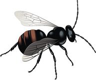 Black wasp Stock Photos