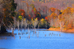 Black water falls state park. Few trees with colorful leaves by the lake in West Virginia near black water falls state park Stock Photos