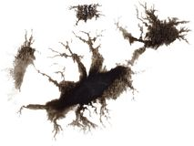 Black watercolor ink blots, Tree with roots. Black watercolor ink blots, splashes, spray texture isolated on white background. Tree with roots stock illustration