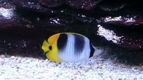 Live Shrimp underwater stock video  Video of aquatic - 104673123