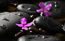 Black wet pebbles with flowers Royalty Free Stock Images