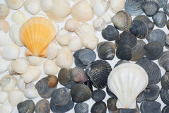Black and white. Shells and two alike chess Royalty Free Stock Image