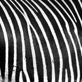 Black and white Royalty Free Stock Image
