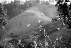 Black&White Immagini Stock