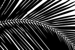 Black and white abstract background of palms leaf stock image