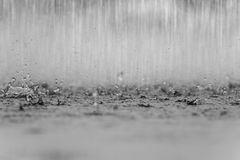Black white abstract background raindrop on the ground. Black white abstract background raindrop on the ground Stock Images
