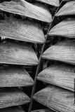 Black and White Close Up Textures in Palm Frond Costa Rica. Black and white abstract close up of palm frond shapes and textures in jungle royalty free stock image