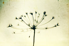 Black and white abstract flower background Stock Photo