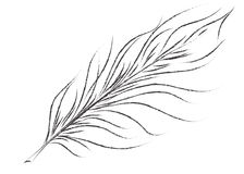 Black white abstract graphic feather vector illustration. Styled natural feather royalty free illustration