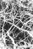 Black and white, abstract pattern of mineral in polarizing micro Royalty Free Stock Images