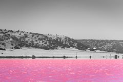 Black, White and accent color of Pink lake next to Gregory in Western Australia in front of desert stock images