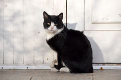 Black and white adult cat Stock Photos