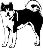 Black and white akita illustration. A black and white vector drawing of an akita dog breed stock illustration