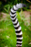 Black and White Animal Tail Stock Photo