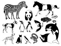 Black and white animals Royalty Free Stock Image
