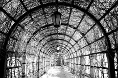 Black and white  archway in a winter park Royalty Free Stock Image