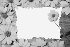 Artistic black and white photography. Beautiful greeting card stock photos