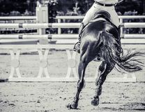 Horse and rider in uniform performing jump at show jumping competition. Equestrian sport background. Black and white art photography monochrome with high Royalty Free Stock Photos