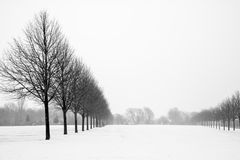 Black and White Avenue of Trees in Snowy landscape. Black and White Avenue of Trees in Snowy landscape Stock Images