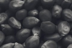 A black and white food background texture image of popcorn kernels. A black and white background texture image of popcorn kernels. This image can be used as a Royalty Free Stock Photography