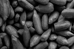 A black and white food background texture image of sunflower seeds. This image can be used as a background for webpage or poster design Royalty Free Stock Image