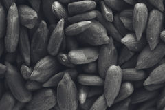 A black and white food background texture image of sunflower seeds. This image can be used as a background for webpages or poster design Stock Image