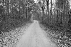 Black and white background of  walkway in dry forest Royalty Free Stock Photography