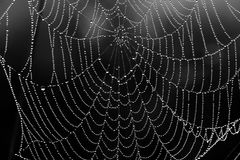 Black and white background from a web with water drops Stock Images