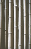 Black and white bamboo Royalty Free Stock Image