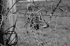 Black and white barbed wire Royalty Free Stock Photo