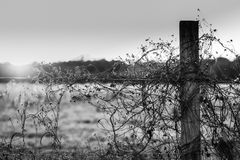 Black and white of barbed wire fence at sunset Stock Photos