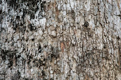 Black and white bark texture. Stock Photo