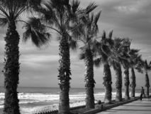Black and white beach landscape royalty free stock images