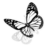 Black and white beautiful butterfly Stock Photos