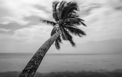 Black and white beautiful landscape of palm near of the ocean Stock Photo