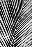 Black and white beautiful palms leaf background. Black and white beautiful palms leaf Stock Photography