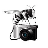 Black white bee on the camera. Royalty Free Stock Photos