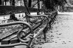 Black and white benches - Black and white background. Autumn leaves - Falling leaves - Black and white background - Seasons Royalty Free Stock Image