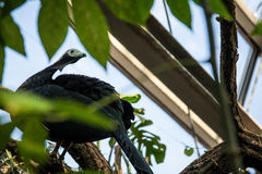 Black and White Bird Perched in Amazon Zoo Habitat Stock Photography