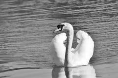 Black And White, Bird, Water Bird, Water Stock Photos