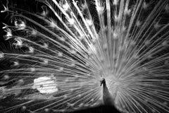 Black And White, Black, Nature, Monochrome Photography Stock Image